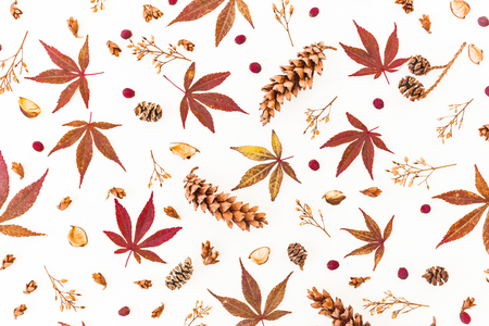 Pattern made of fall leaves, dried flowers and pine cones on white background. Flat lay, top view, Autumn composition. Stock Photo