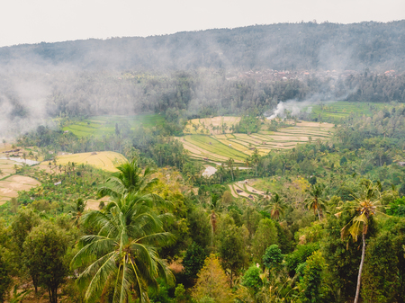 Rice fields and coconut palms in Bali island. Aerial view with terraces