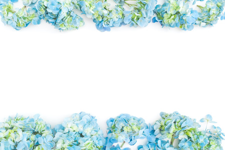 Flower border of blue hydrangea flowers on white background. Flat lay, top view. Floral background