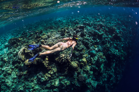 Young woman free diver explores reef in ocean, underwater photo with diver 版權商用圖片