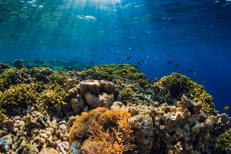 Mondo sottomarino selvaggio con coralli e pesci tropicali.