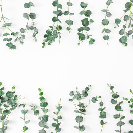Floral frame with eucalyptus branches on white background. Flat lay, top view Stock Photo