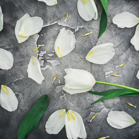Floral composition made of white tulips on dark background. Flat lay, top view. Floral background. Stock Photo