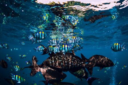 Underwater wild world with school of fish in blue ocean