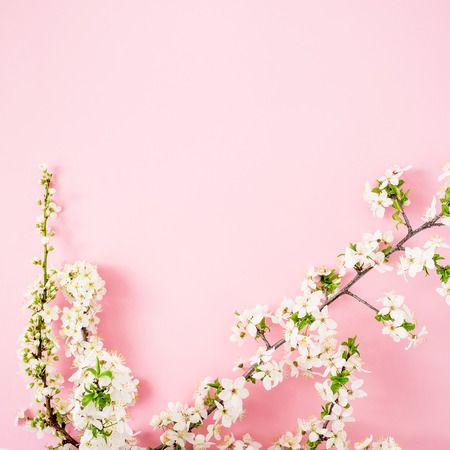 Floral frame with white spring flowers on pink background. Flat lay, top view