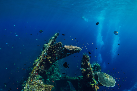 Beautiful underwater world with tropical fish and corals at shipwreck