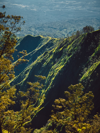 Aerial view of mountain with forest and trees in Bali
