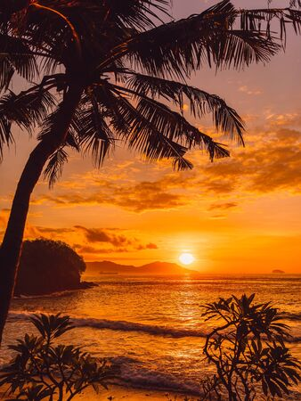 Coconut palm and sunrise at tropical beach with sea