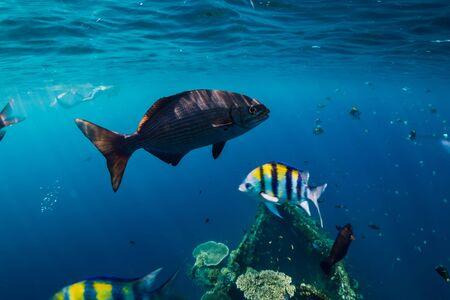 Erstaunliche Unterwasserwelt mit tropischen Fischen und Korallen am Schiffswrack Standard-Bild