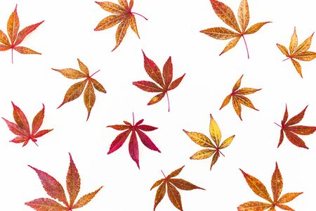 Autumn pattern of fall maple leaves on white Stok Fotoğraf