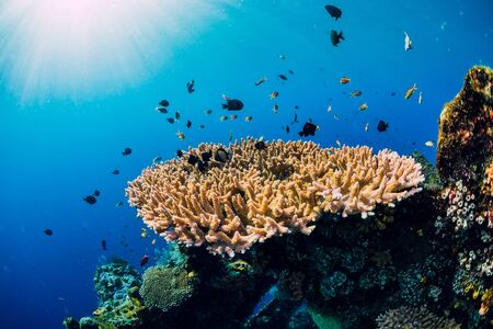 Underwater world with corals and tropical fish. Underwater sea nature in blue ocean Фото со стока