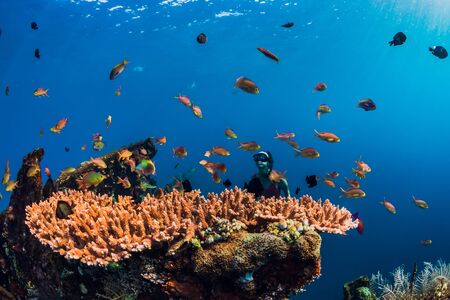Underwater world with corals and tropical fish. Underwater sea nature in blue ocean 写真素材