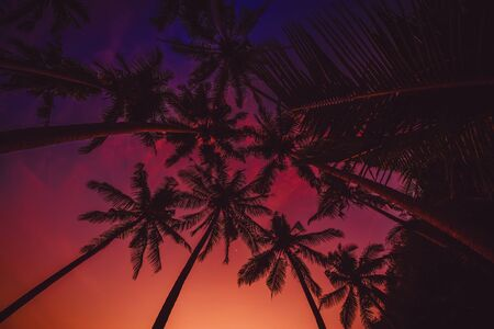Tropical coconut palms with amazing sunset colors