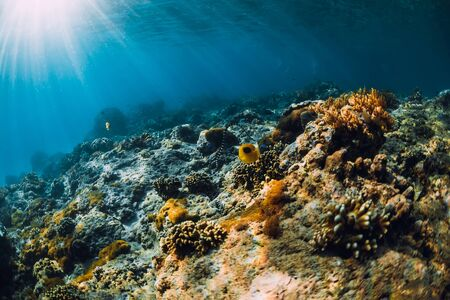 Underwater scene with corals, fish and sea snake. Tropical blue sea