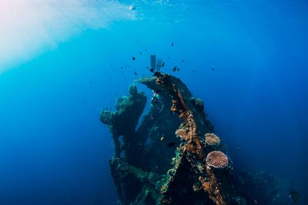 Woman freediver swim with fins at wreck ship. Freediving in wreck