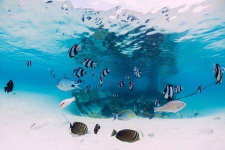 Tropical blue ocean with wreck of boat on sandy bottom and school of fish, underwater in Mauritius Stok Fotoğraf