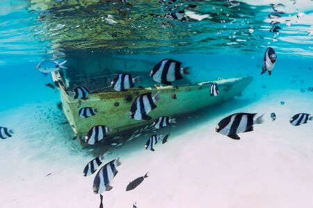 Blue ocean with wreck of boat on sandy bottom and school of tropical fish, underwater in Mauritius Stok Fotoğraf