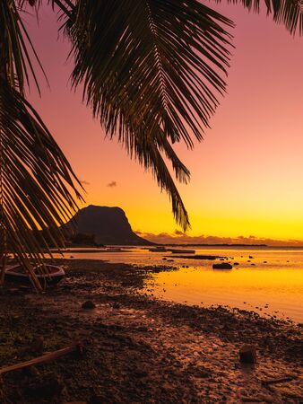 Sunset and coconut palm with Le Morn mountain on background in Mauritius. Stok Fotoğraf