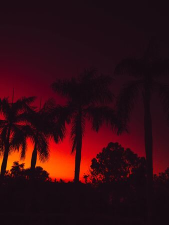 Colorful bright sunset or sunrise with trees in tropics Stok Fotoğraf