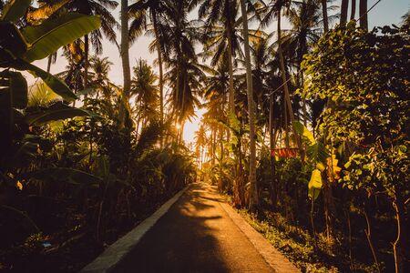 Road in palm jungle with warm sunset light on Nusa Penida island.