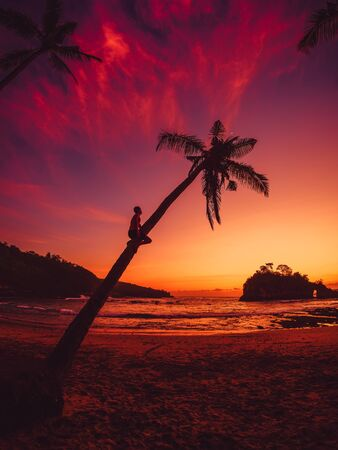 Traveler man sit on coconut palm and look at bright sunset or sunrise on tropical beach Stok Fotoğraf