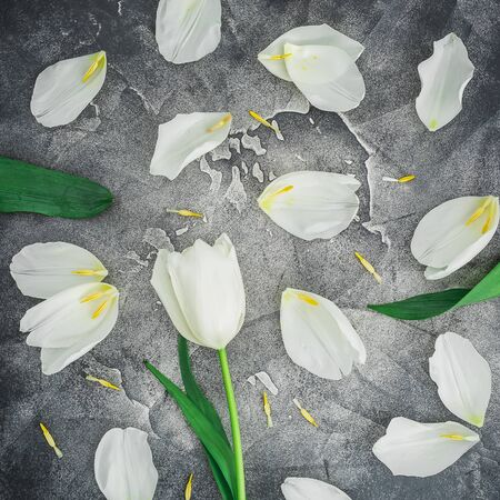 Floral spring pattern made of white tulips on gray. Flat lay, top view. Flower background. Stok Fotoğraf
