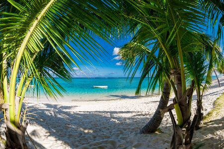 Palm luxury beach with coconut palms, sand and quiet ocean. Tropical holiday banner