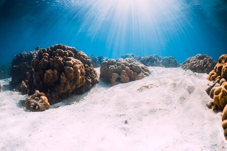 Ocean with sandy bottom and corals underwater in Hawaii