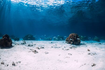 Underwater view with white sand and corals in Hawaii Stok Fotoğraf