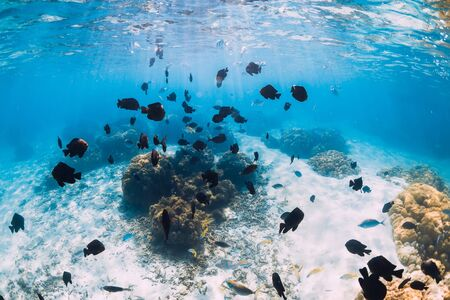 Underwater view with white sand, tropical fish and corals in Hawaii