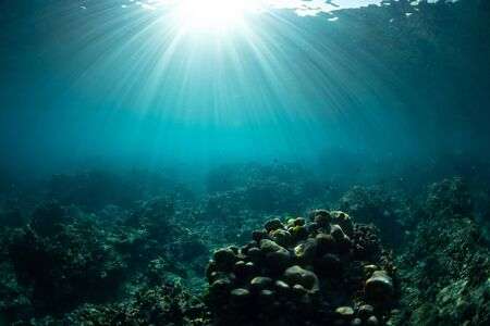 Underwater view with corals, rocks and sun rays. Tropical sea and reef Stockfoto - 134014195