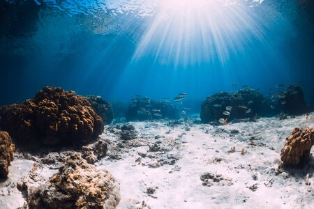 Underwater view with corals, sand and sun rays. Tropical sea and reef