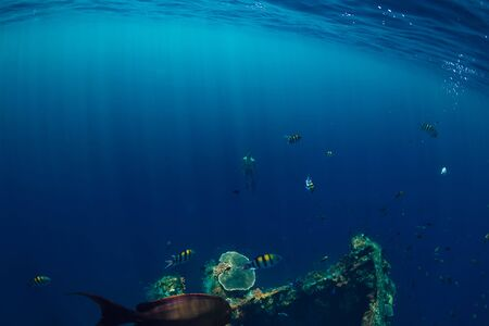 Beautiful underwater world with tropical fishes and corals at shipwreck