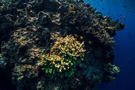 Underwater rocks with coral and fish in blue transparent ocean. National park Menjangan island, Bali