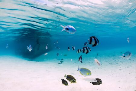 Tropical blue sea with wreck of boat on sandy bottom and fish, underwater in Mauritius