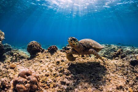 Meeresschildkröte gleitet im Ozean. Unterwasseransicht mit Schildkröte