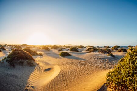 Dune with sand textures and plants at sunset in Famara beach, Lanzarote Spain. Stock Photo