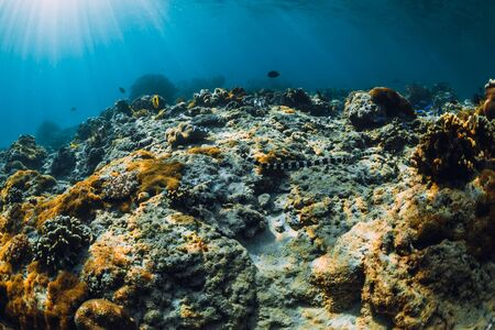 Underwater scene with corals and sea snake in tropical sea