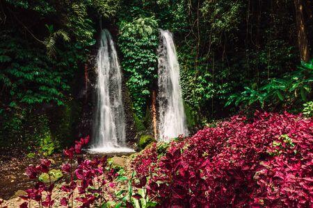Jungle waterfall cascade in tropical rainforest with pink plants Zdjęcie Seryjne