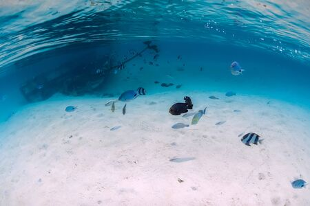 Tropical blue ocean with wreck on sandy bottom and tropical fish, underwater in Mauritius