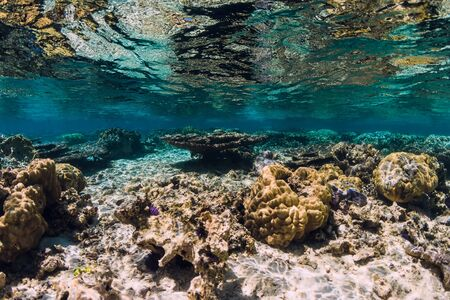 Underwater scene with corals and fish in ocean