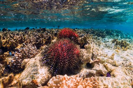 Underwater scene with corals and red starfish in tropical ocean