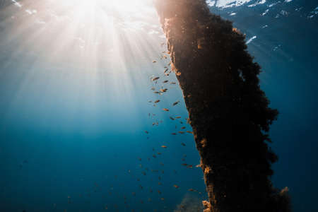 School of fish and wreck in transparent blue ocean and sun light
