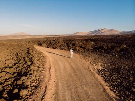 Aerial view with sporty woman run on dirty road amid lava fields. Lanzarote, Canary Islands.
