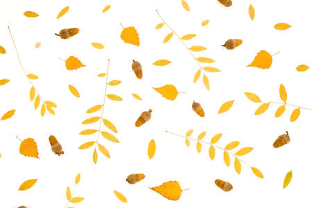 Autumnal composition made of fall leaves on white background. Flat lay, top view. Thanksgiving day. Reklamní fotografie
