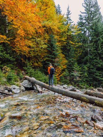 Hiker man on a log over the river in autumnal mountains. Mountain river and hiker traveler