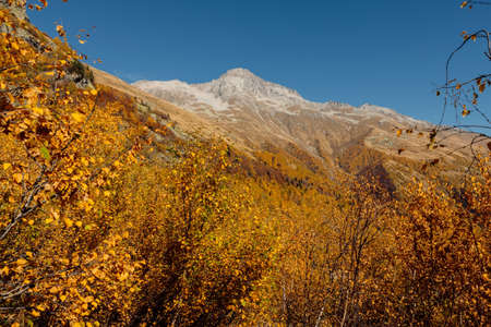 Rocky mountains and autumnal forest. High mountain landscape