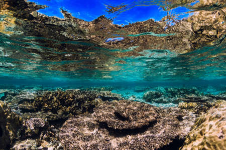 Underwater reef with corals and fish in tropical ocean Stok Fotoğraf