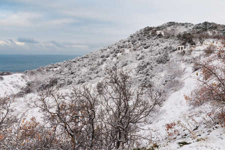 Winter time with snow trees and sea. Snowy cold landscape 写真素材
