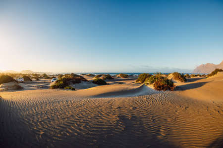 Sandy dunes with plants at sunset in Famara beach, Lanzarote.